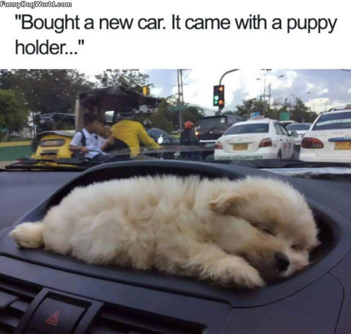 A Car With A Puppy Holder