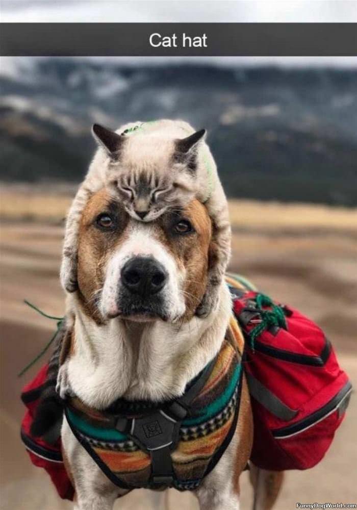 A Cat Hat