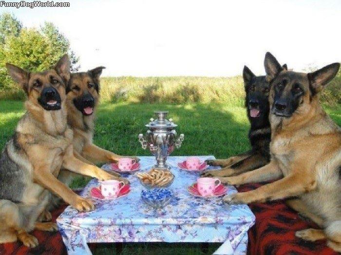 A Dog Tea Party