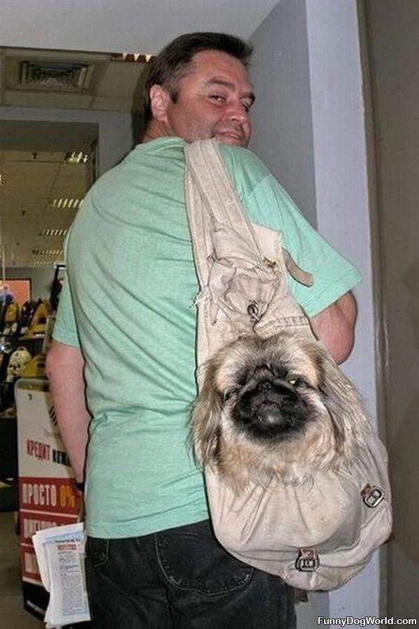 A Doggie Bag