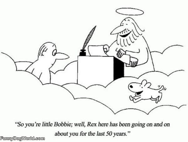 A Dogs Loyalty