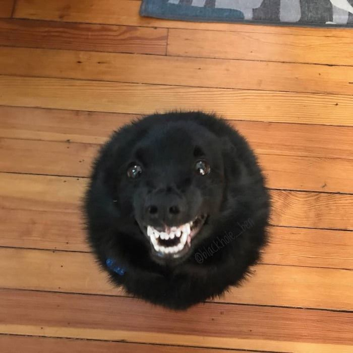 A Fluff Ball With Teeth