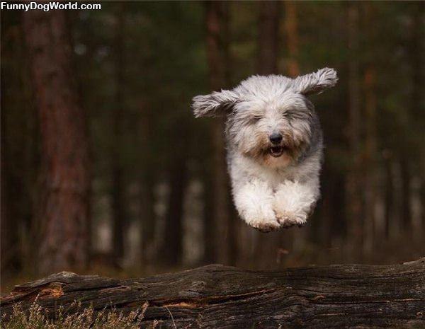 A Flying Fast Dog
