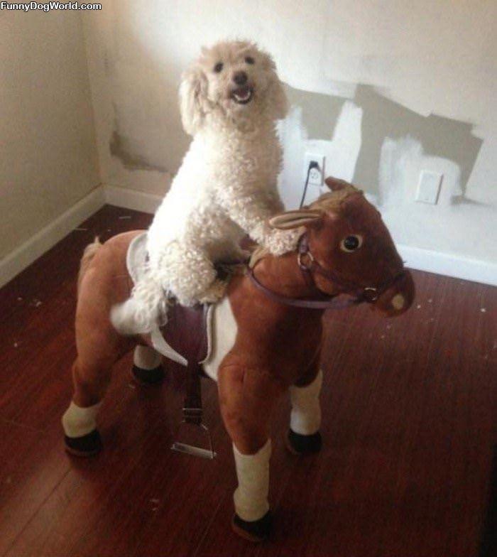 A Horsey Ride