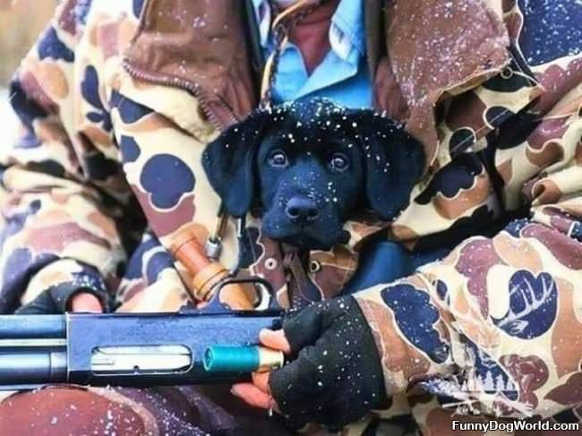 A Hunting Puppy