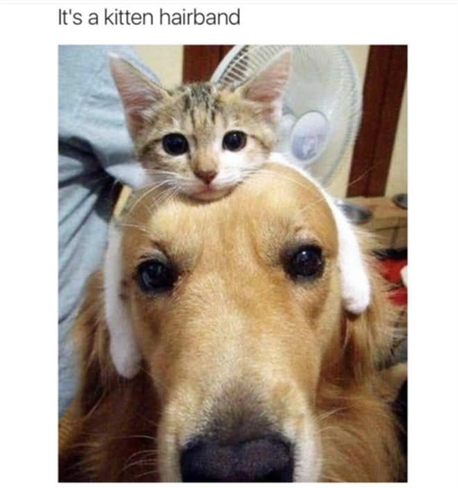 A Kitten Hairband