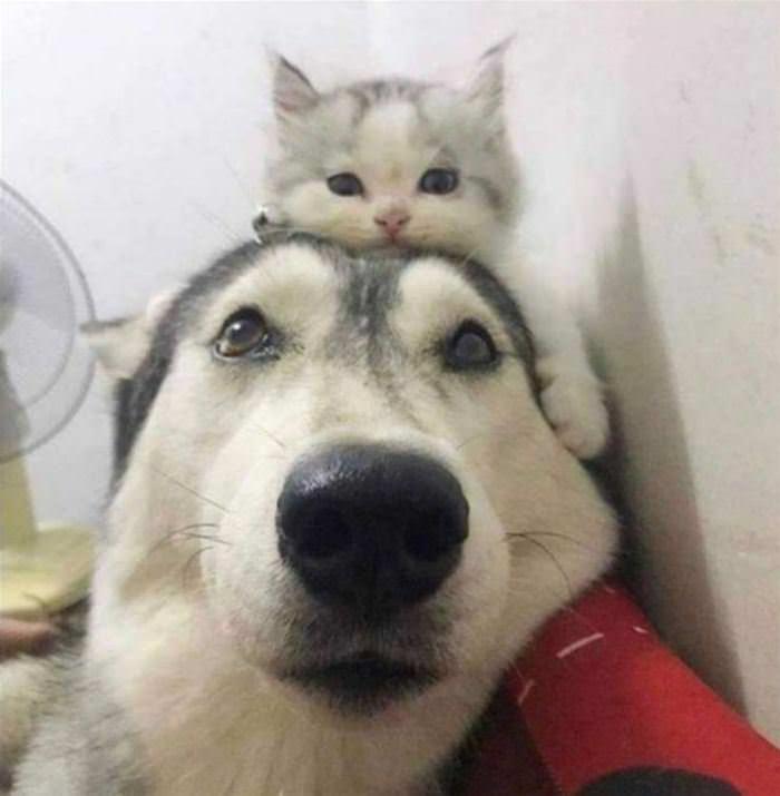 A Little Hat Cat