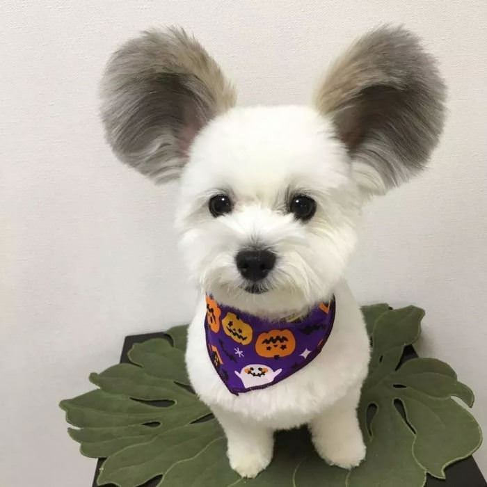 A Very Fluffy Set Of Ears