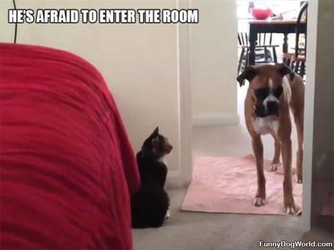 Afraid To Enter A Room