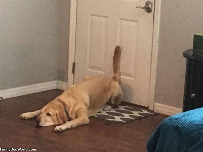 Against The Door