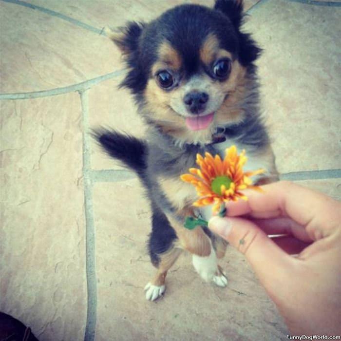 Ahhh A Flower