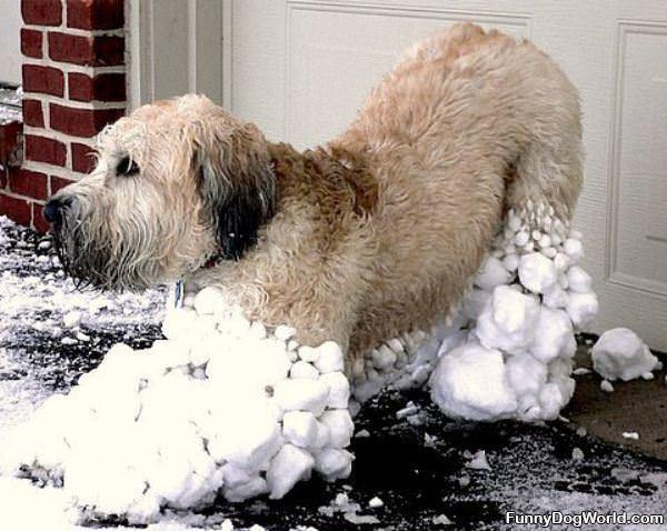 All Snowy Dog