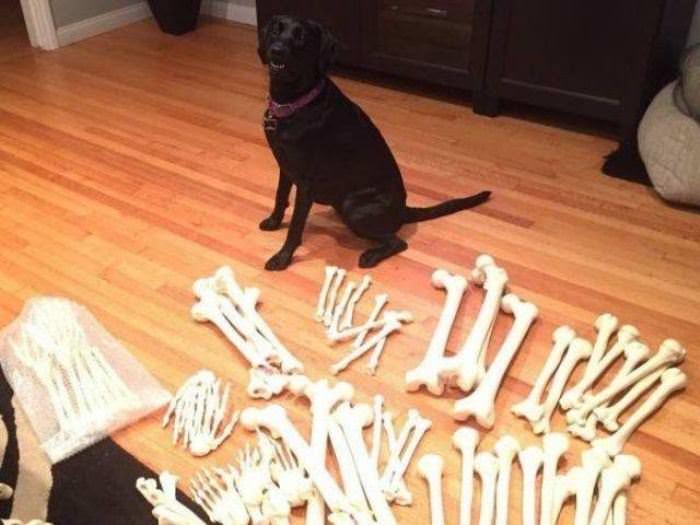 All The Bones