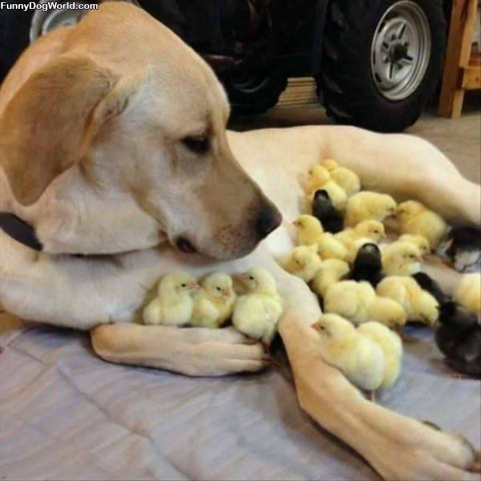 All These Chicks