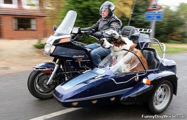 Amazing Dog Ride