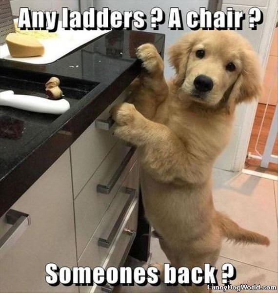 Any Ladders