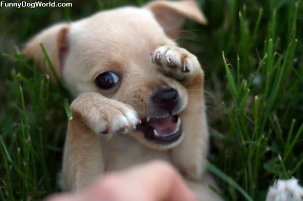 Arghh Puppy