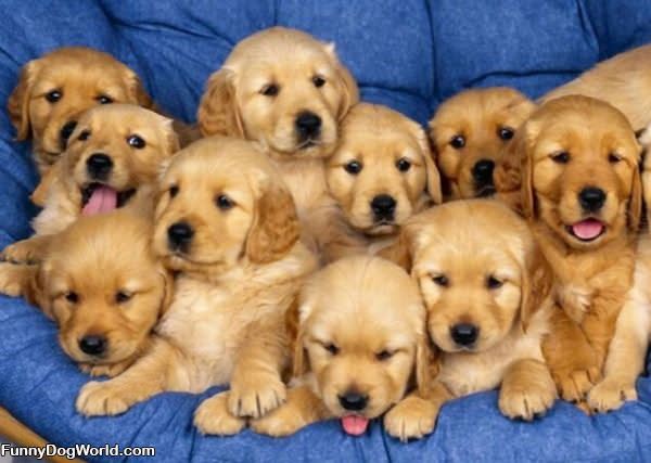 Army Of Puppies