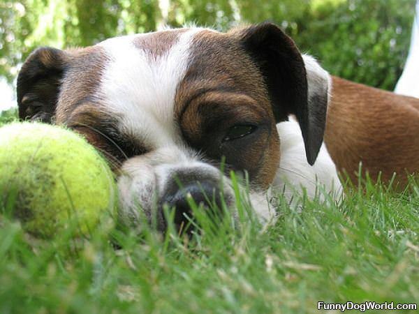 Asleep With My Ball