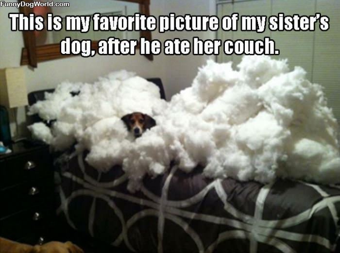 Ate The Couch