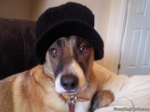 Barney In A Nice Warm Hat