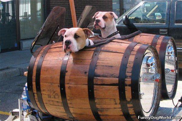 Barrell Dogs