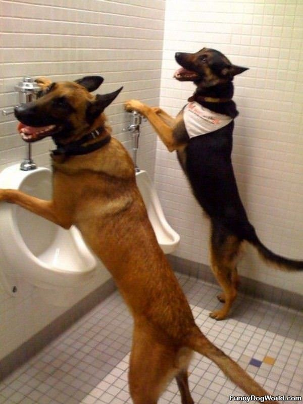 Bathroom Dogs