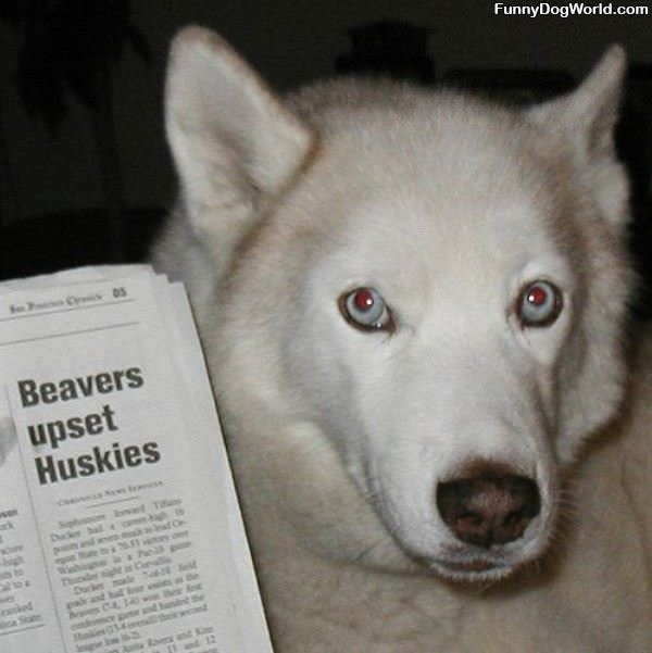 Beavers Upset Huskies