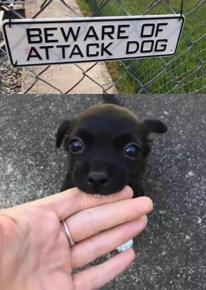 Beware Of The Attack Dog