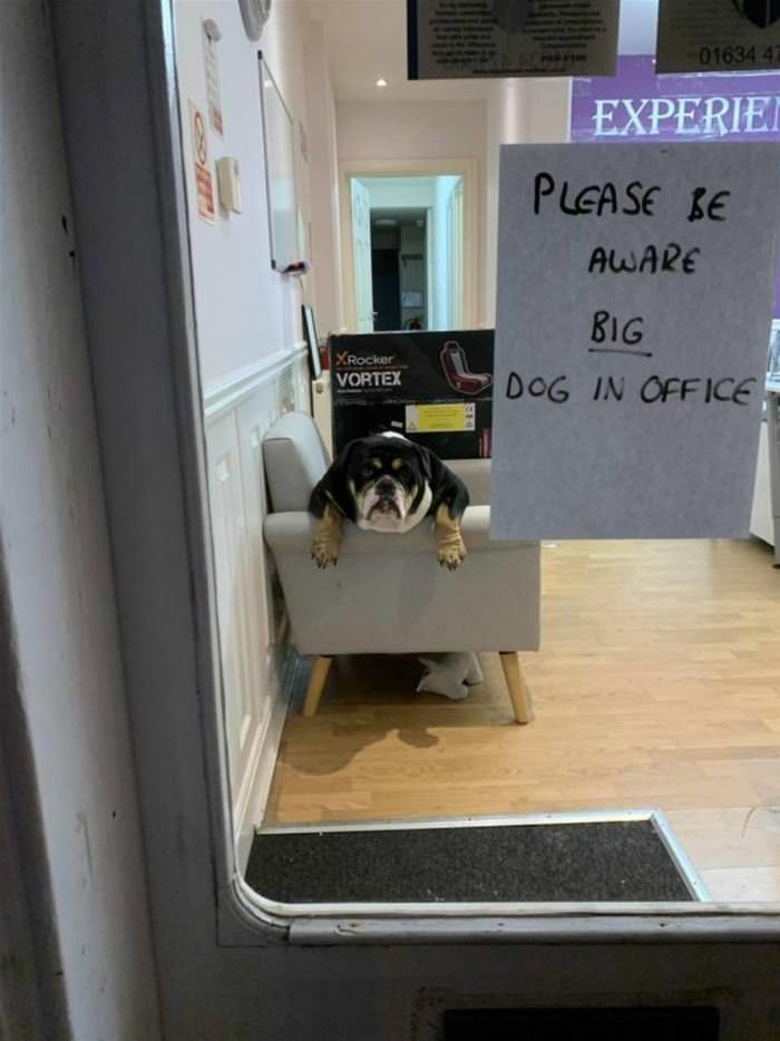 Big Dog In Office