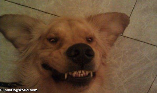 Big Smiling Dog