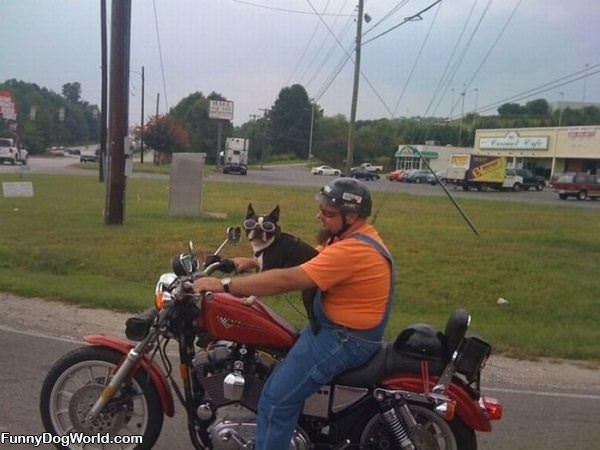 Bike Ride Dog
