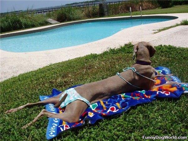 Bikini Dog