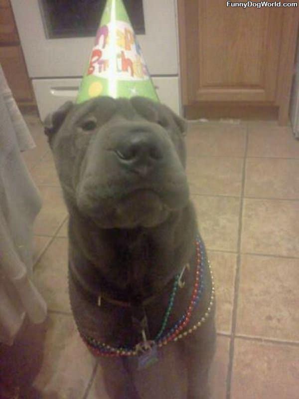 Birthday Hat Dog