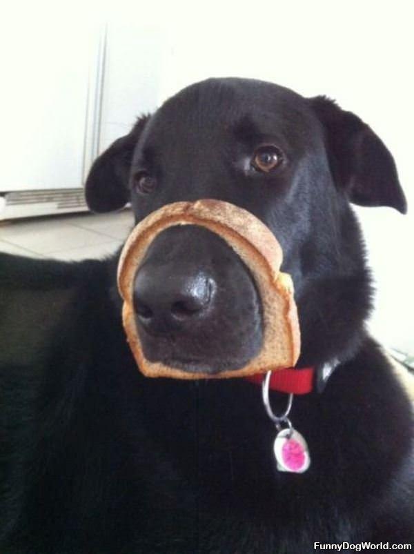 Bread Face Dog