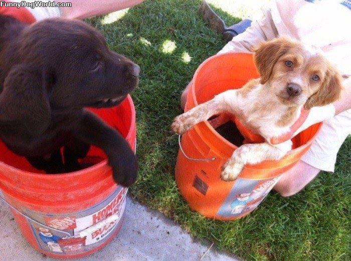Bucket Pups