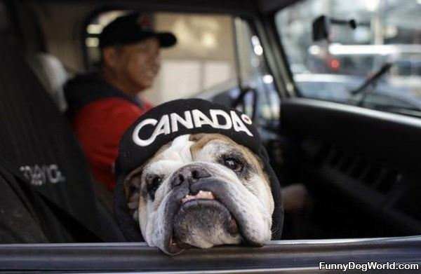 Canada Dog