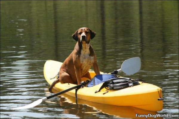 Canoing Dog
