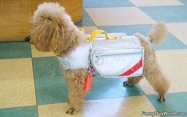 Carryer