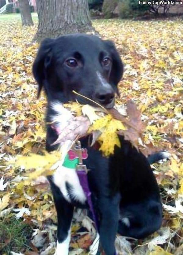 Chanel Loves Leaves