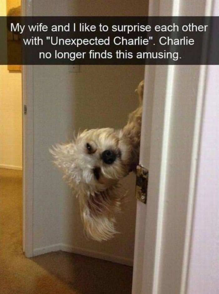 Charlie No Longer Finds This Fun