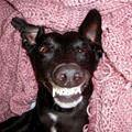 funny dog 3