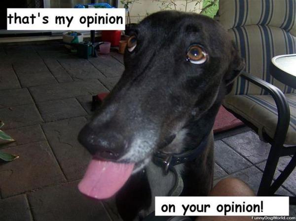 Cheeky Opinion