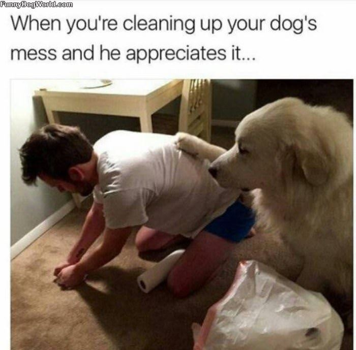Cleaning Up Your Dogs Mess