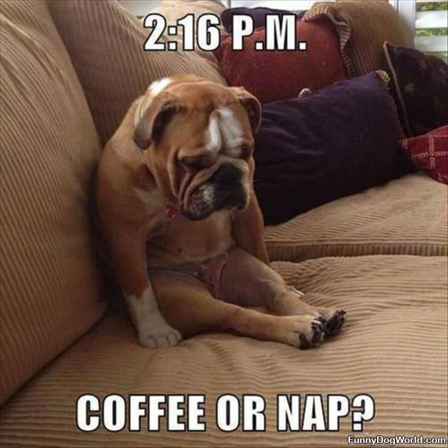 Coffee Or Nap