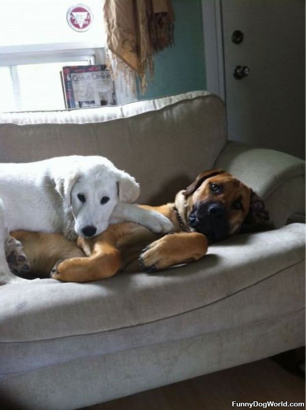 Comfy Dog Couch