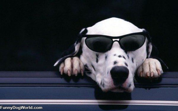 Cool Dog Relaxing