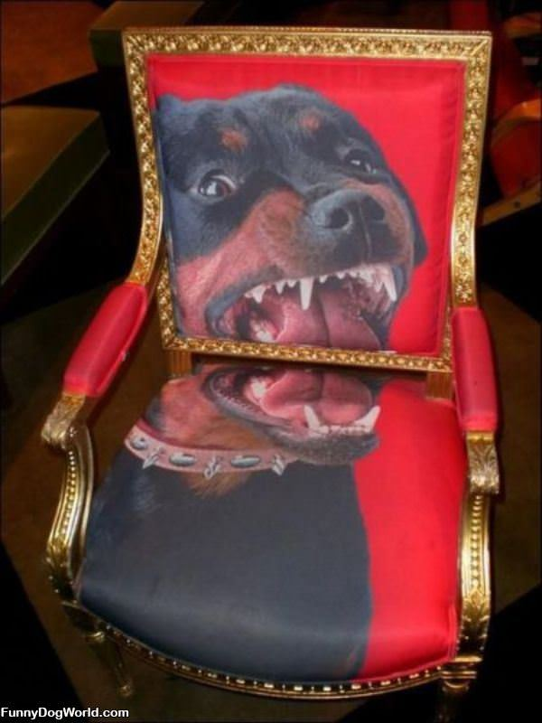 Crazy Dog Chair