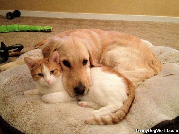 Cute Dog And Cat Buddies