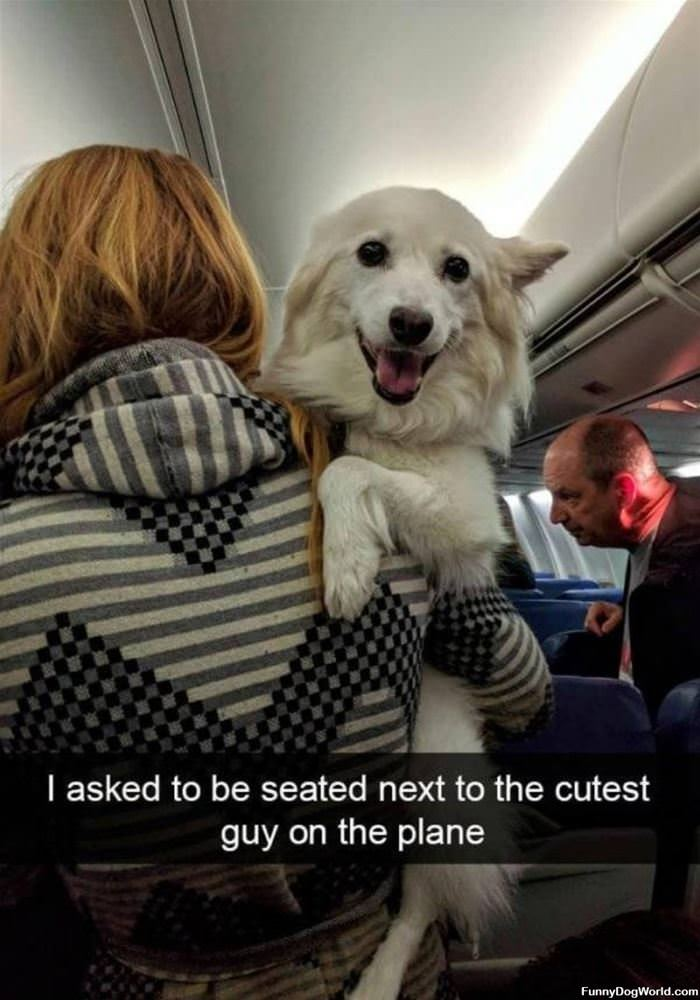 Cutest Guy On The Plane